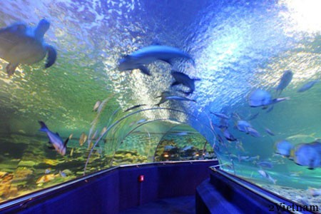 VINPEARL – Океанариум