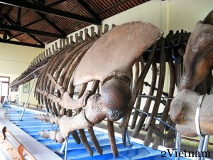 китовый храм вьетнам