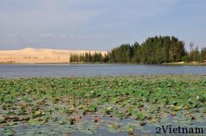 озеро лотосов вьетнам
